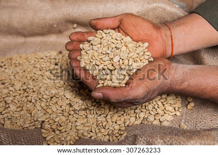 green coffee beans on hand - stock photo