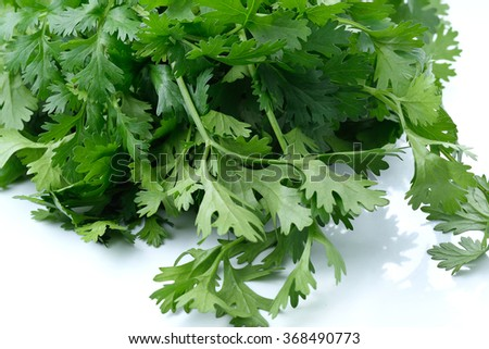 Green coriander leaves close-up, isolation on a white background. - stock photo