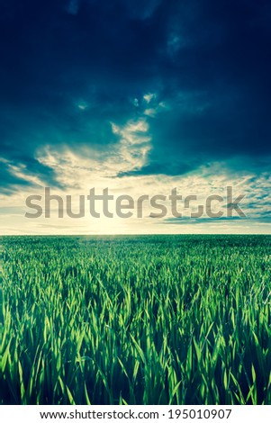 green corn field at sunrise - stock photo