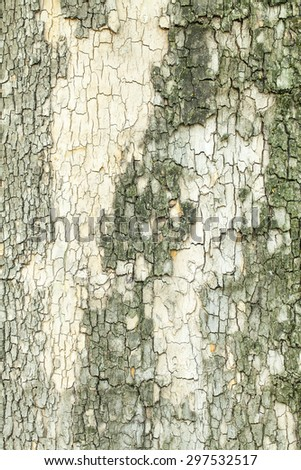 Green cracked mossy tree bark texture closeup - stock photo