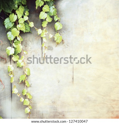 green creeper (vine grape) leaves on worn paper ;  vintage background - stock photo