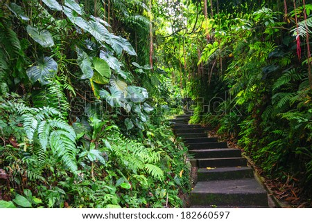 Green Dark Tropical Jungle pathway (Bali, Indonesia) - stock photo
