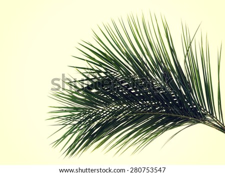 Green delicate leaf of palm tree - stock photo