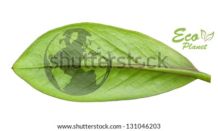Green earth concept, cut the leaves of plants, isolated over white - stock photo