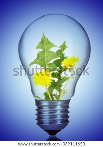 Green eco energy concept. Flowers growing inside light bulb, on blue background - stock photo