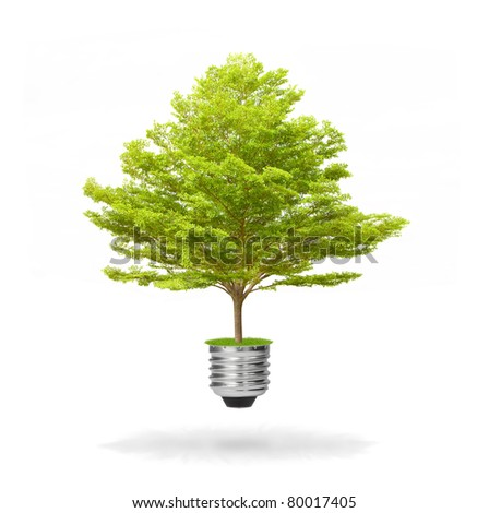 green energy eco concept, tree growing out of bulb - stock photo