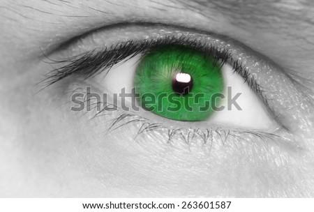 Green eye. Macro shot. - stock photo