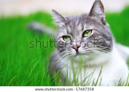 Green-eyed Cat in full growth on a background of a grass - stock photo