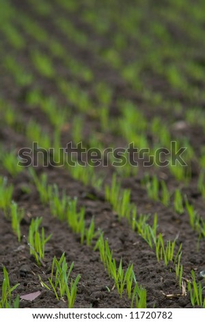 Green farm field in spring - stock photo