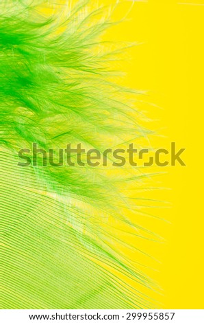 green feather macro on yellow background - stock photo