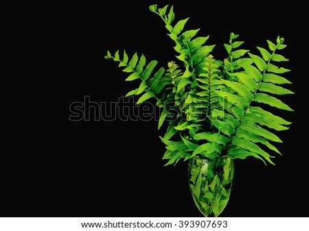 Green fern fronds in a vase on a black background as image for Earth Day on April 22. Copy space available - stock photo