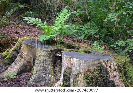 Green fern growing out of moss covered tree stump - stock photo