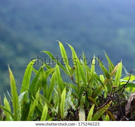 Green fern, kaoyai Thailand - stock photo