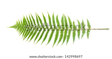 Green fern leaf isolated on white  - stock photo