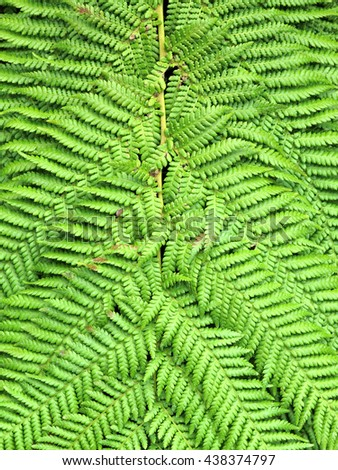 Green fern leaves macro close-up background - stock photo