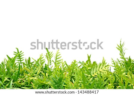 Green fern leaves on white background - stock photo