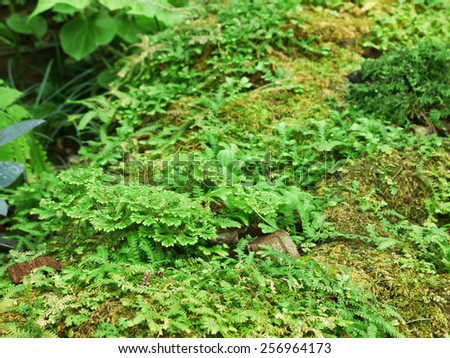 Green ferns and moss growing on tree - stock photo