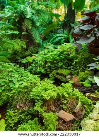 green ferns garden  - stock photo