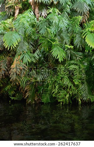 Green ferns in tropical forest hanging over water - stock photo