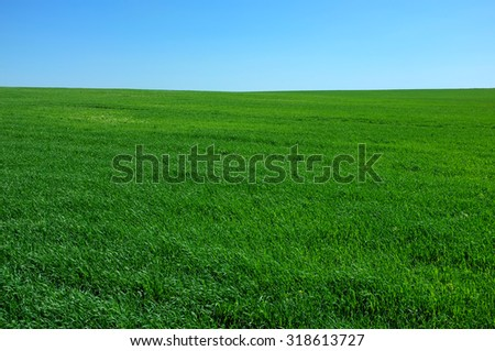 Green field and blue sky landscape for background. A curved line of horizon. - stock photo