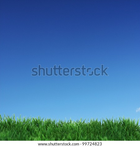 Green field and blue sky without clouds - stock photo