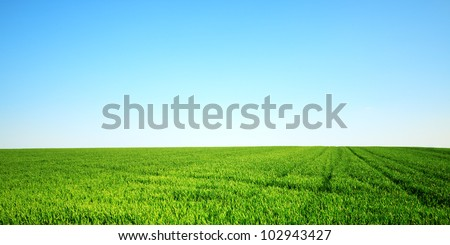 Green field and clear sky - stock photo