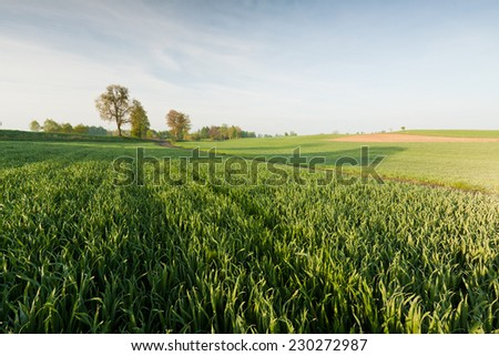Green field and sunrise - stock photo