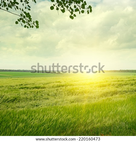 green field and sunrise on the cloudy sky - stock photo