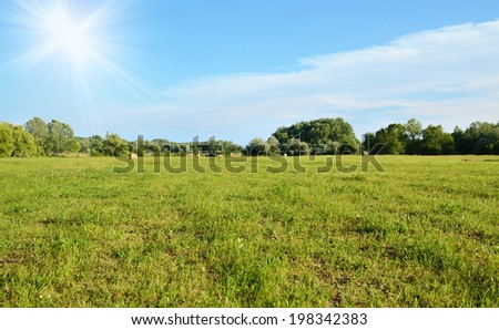 Green field at summer, detail - stock photo