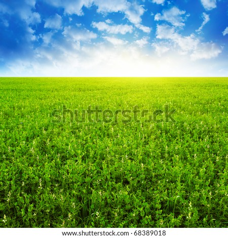 Green field ,blue sky and sunlight. - stock photo