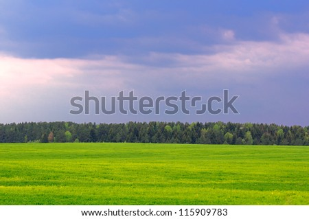 Green Field, Forest and Blue Sky in Summer - stock photo
