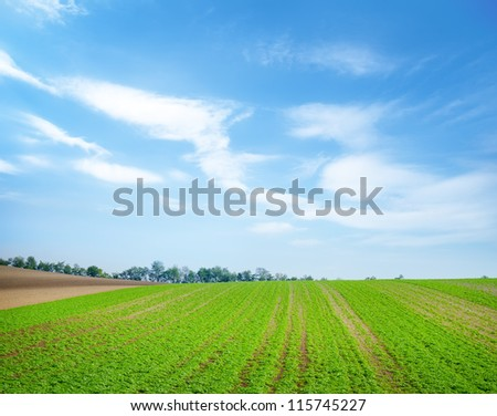 Green field in Austria - stock photo