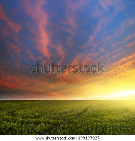 Green field in sunset  - stock photo