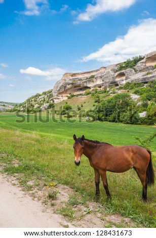 Green field, mountains and horses, Crimea, Ukraine - stock photo
