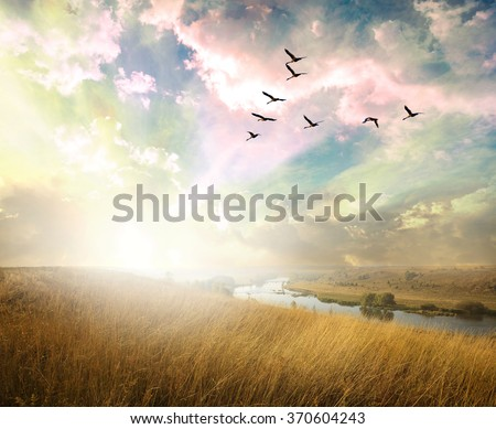 Green field of grass and flying birds - stock photo