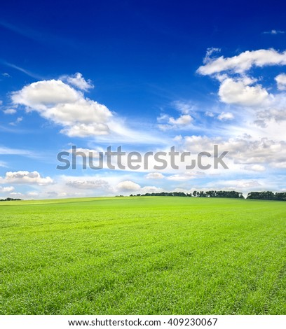 Green field of young wheat in early summer on the background blue sky with clouds - stock photo