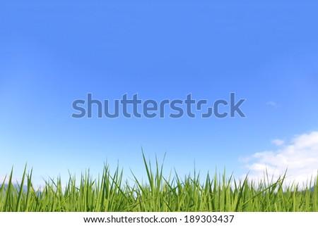 Green Field - Stock Image - stock photo