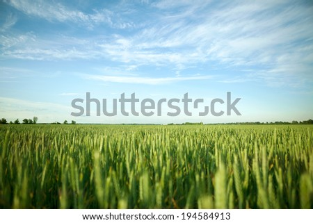 Green field under midday sun - stock photo
