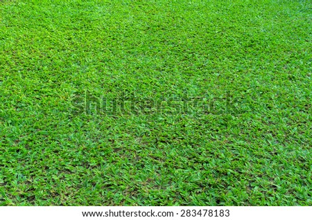 Green field with beautiful background texture. - stock photo