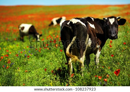 Green field with cows in summer - stock photo