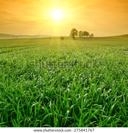 Green field with dew on grass and trees, beautiful landscape - stock photo