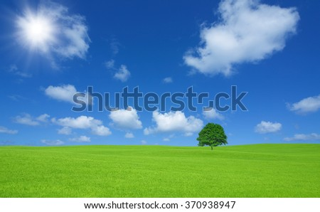 Green field with lone tree and white cloud - stock photo