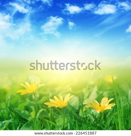 Green field with spring flowers and sunlight. - stock photo