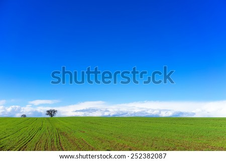 green field with wheat and bright blue sky - stock photo