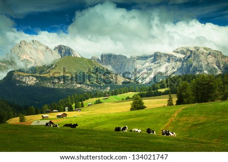 Green fields in the Alps, Italy - stock photo