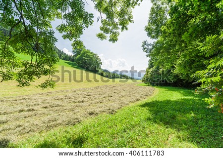 Green fields on alpine slopes framed by trees with clear blue sky - stock photo