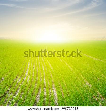 green fields scene - stock photo