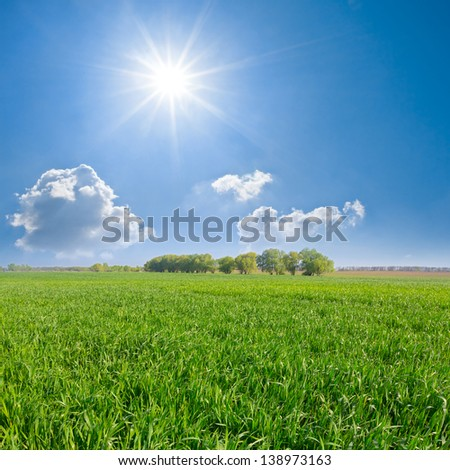 green fields under a sparkle sun - stock photo