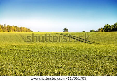 Green fields with young plants and a clear blue sky - stock photo