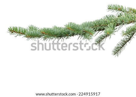 green fir branch for christmas, isolated on white - stock photo